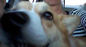 Kodi selfie