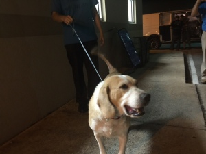 One of many dogs given shelter by caring organizations like Flagler Humane Society