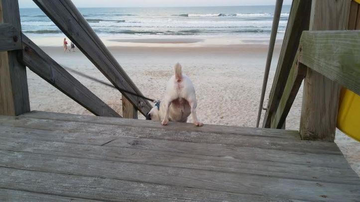 Buddy Beach