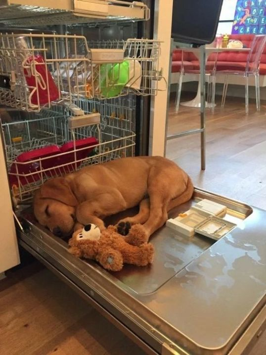 sleeping dishwasher dog
